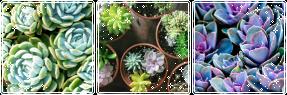 dying inside  Succulent_mood_bundle_by_kalakitten-danopdw