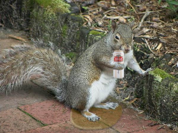 Προς Λεωνίδα τον Διαχειριστή μας!  - Σελίδα 6 Pissed_as_a_squirrel_by_tan47-d38up20