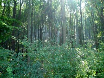 Hyarmenya dzsungel Hyarmenya_by_stixion-das9p5d