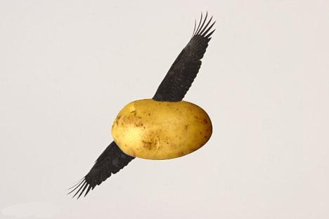 [Jeu] Association d'images - Page 20 Flying_potato_by_erbemirbe-d3a1tmr