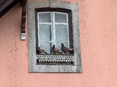Prozori koji govore A%20Janela