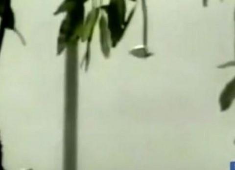 Phénomènes paranormaux dans la province de La Pampa ? Ovni.jpg-169977024