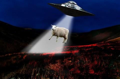 Abductions de bétails au Pays de Galles Ufo-sheep9