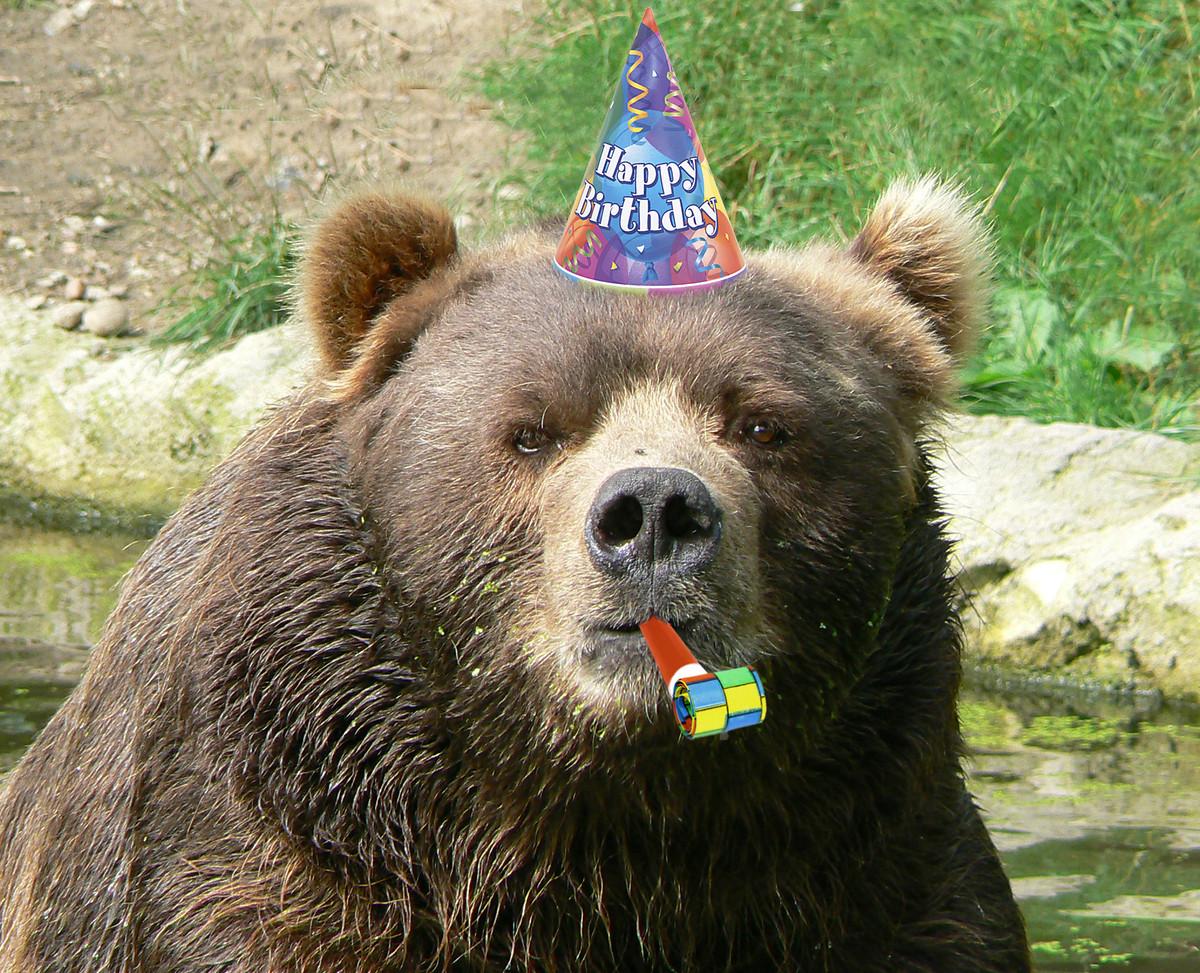 It's MrsGrizzley's birthday! S1200_Male_kodiak_bear_face