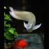 Changement d'eau d'un aquarium sans filtre  - Page 2 T016dcd6415412c00a9