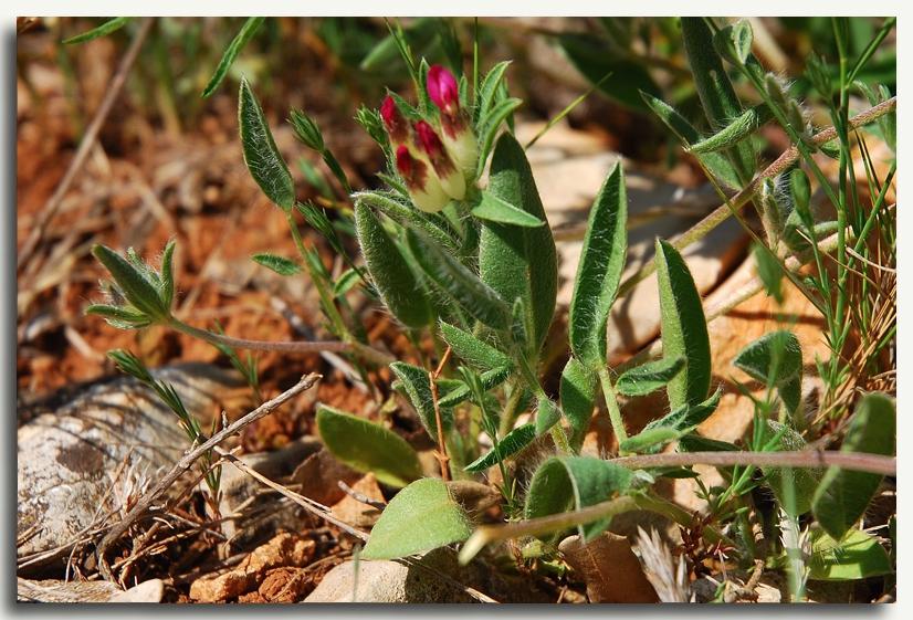 une fleur à découvrir par blucat (21juillet)trouvée par ajonc 84031993_o