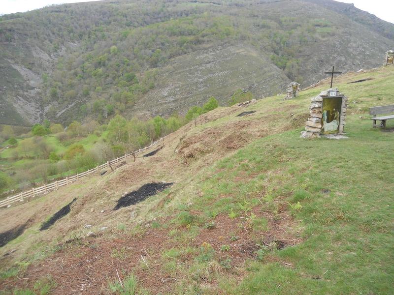 Les pins de Garabandal encerclés de clôtures  95612124