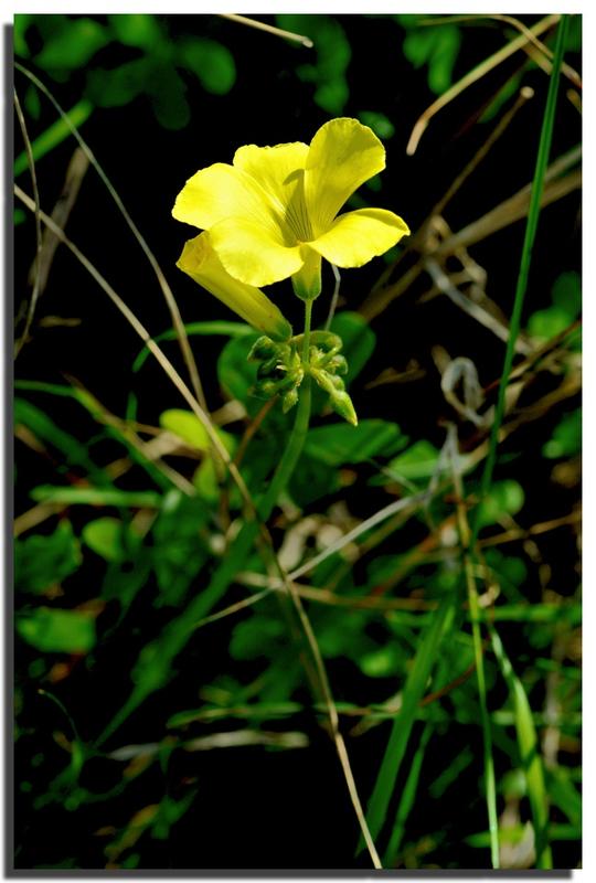 la fleur de Martin du 13 juin trouvée par Martine - Page 3 94259308