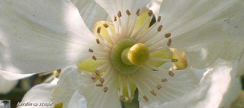 la fleur de Martin du 11 janvier trouvée par Jovany - Page 2 38562807