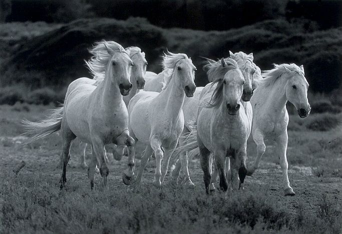 les chevaux.. - Page 14 80695427_o