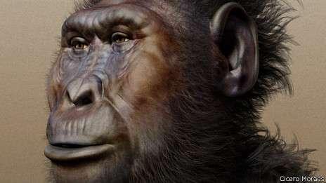 Los puñetazos marcaron la evolución del rostro masculino 140609120808paranthropusboisei464x261ciceromoraes