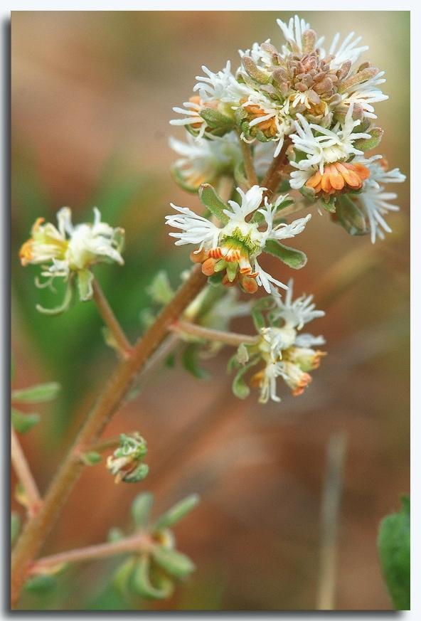 une fleur - blucat-  8 août trouvée par martine - Page 2 85892534_o