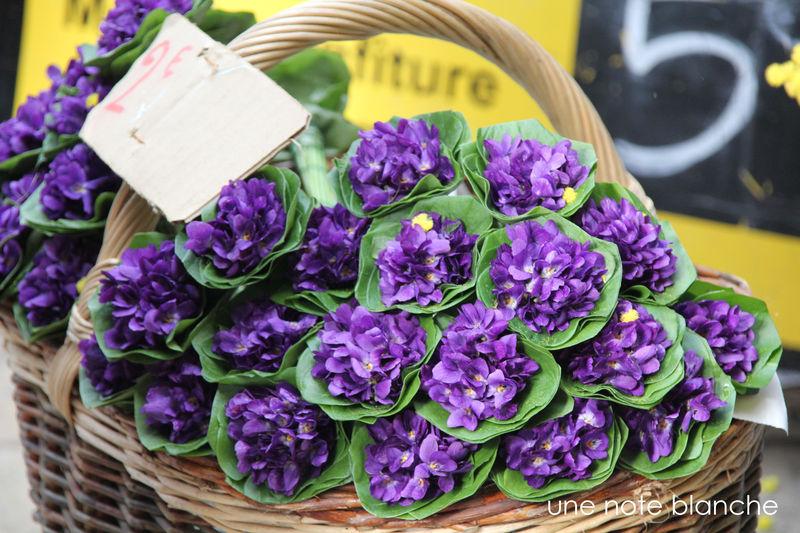 rêve 2..la violette 61778840