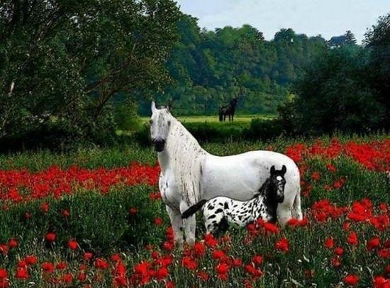 les chevaux.. - Page 15 105689399