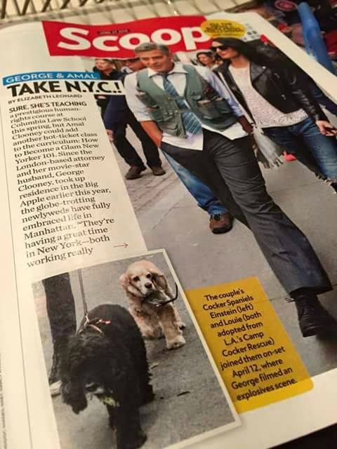 Amal and EINSTEIN!!! (and a blonde pooch) visit George on set, 4-12-15 - Page 2 103567091
