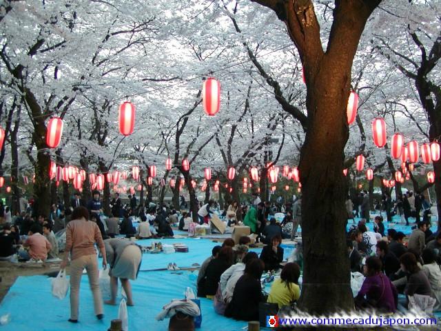 Les cerisiers en fleur ! Le Hanami. 84874527_o