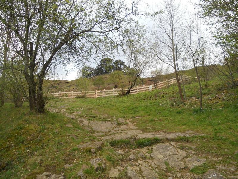 Les pins de Garabandal encerclés de clôtures  95611805