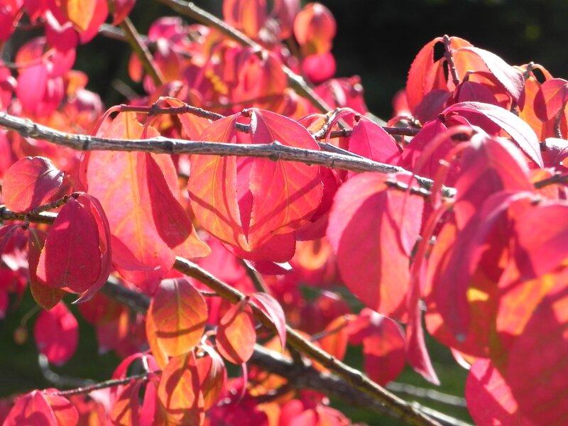 Fleurs du moment - Page 8 98776871
