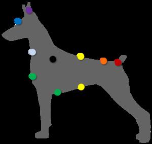 Massages et soins énergétiques pour les animaux. 65753166_p