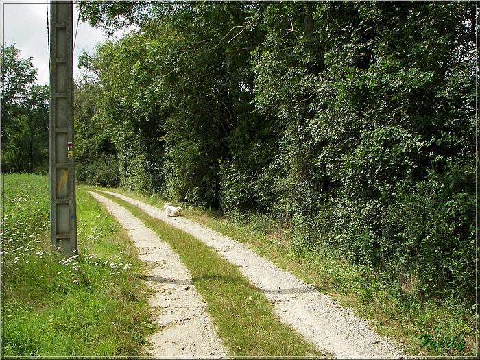 Entre Avre et Meuvette, je bois debout 20070812_006
