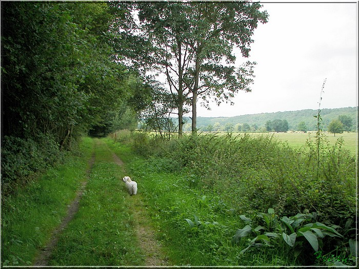 Entre Avre et Meuvette, je bois debout 20070812_019