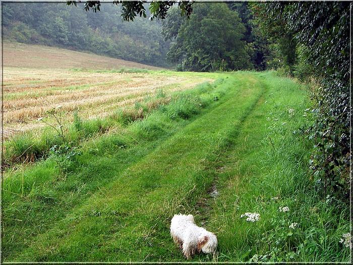 Entre Avre et Meuvette, je bois debout 20070812_058