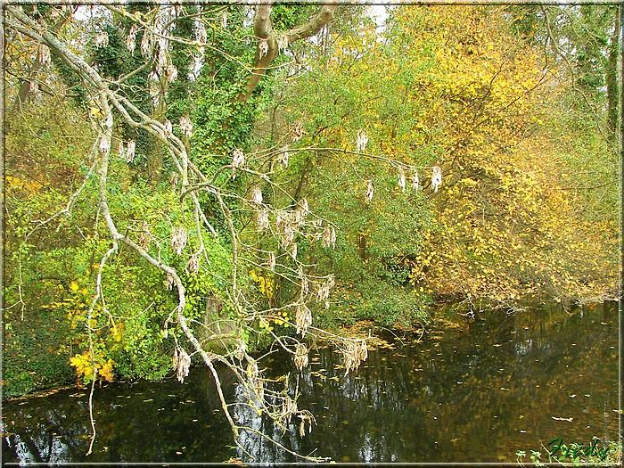 L'automne à l'étang de Croth 20071108_018