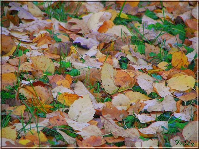 L'automne à l'étang de Croth 20071108_036