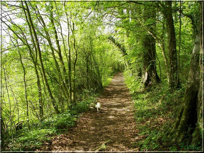 Le Chemin de la Calonne 20080503_027