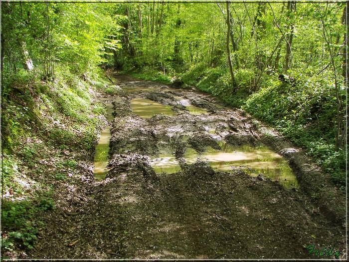 Le Chemin de la Calonne 20080503_040