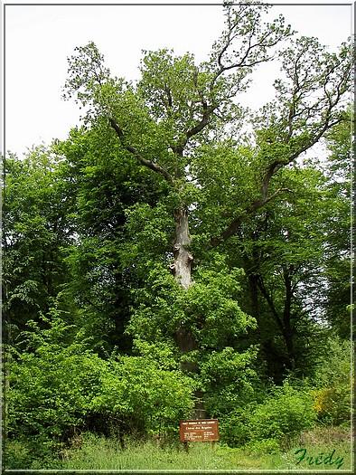 Le Chêne des Régales 20080509_023