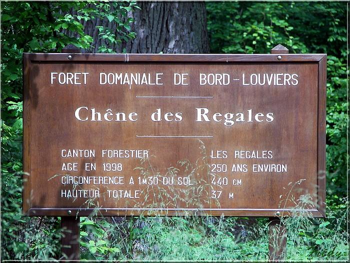 Le Chêne des Régales 20080509_025
