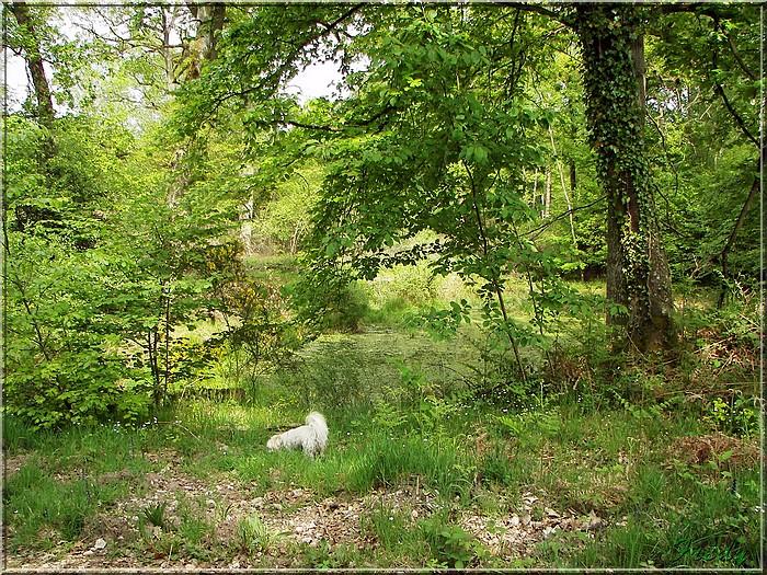 Le Chêne des Régales 20080509_060