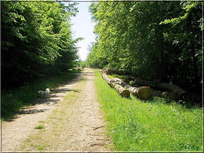 Lyons la Forêt : La Fontaineresse 20080512_016