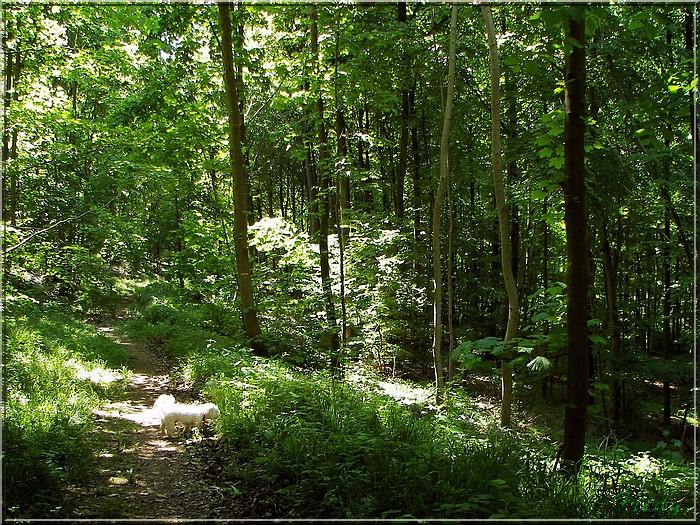 Lyons la Forêt : La Fontaineresse 20080512_025