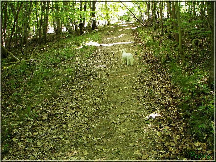 Lyons la Forêt : La Fontaineresse 20080512_031