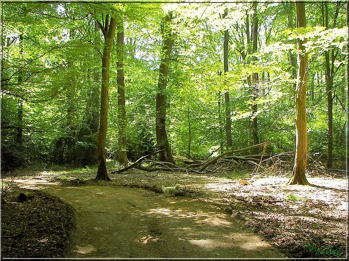 Lyons la Forêt : La Fontaineresse 20080512_038