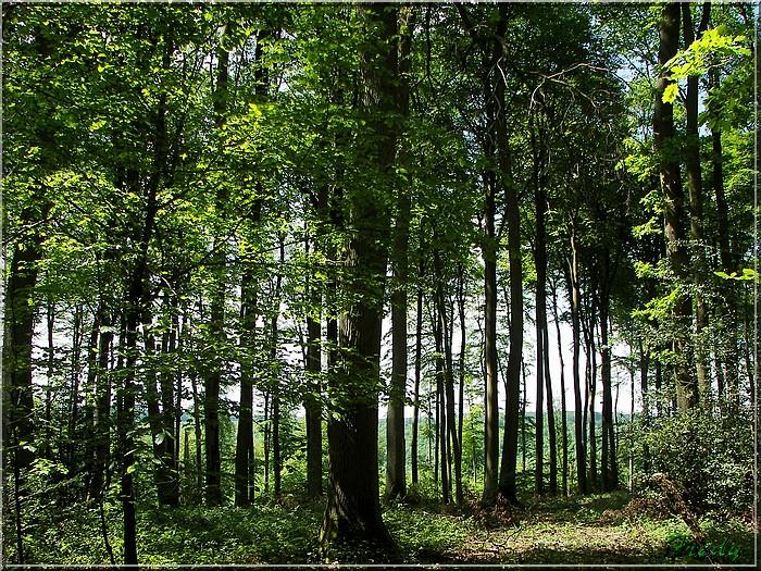 Lyons la Forêt : La Fontaineresse 20080512_041