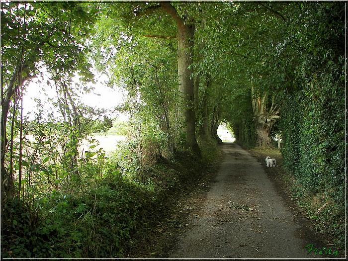 Saint Aubin du Thenney 20080823_005