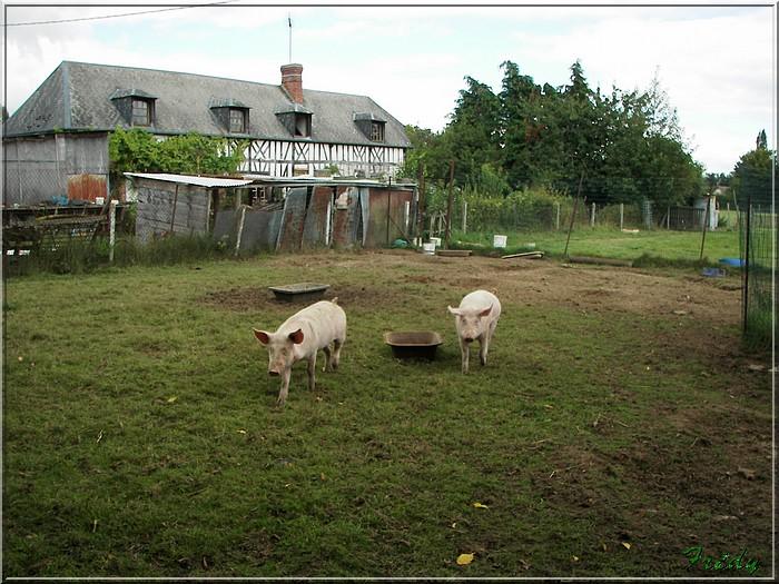 Saint Aubin du Thenney 20080823_007
