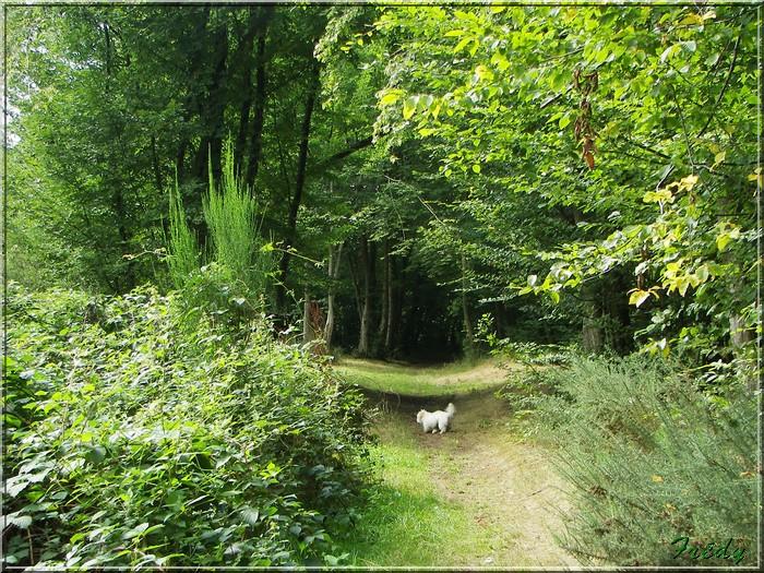 Saint Aubin du Thenney 20080823_042