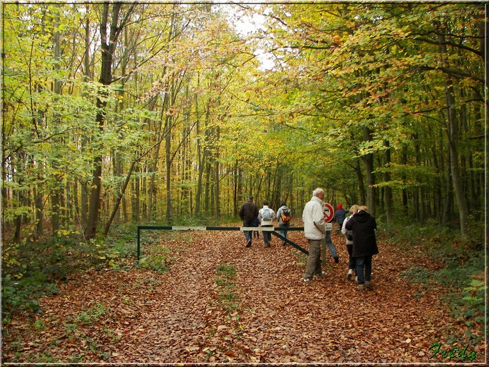 Les Brûlins, forêt de Bord-Louviers 20081030_002
