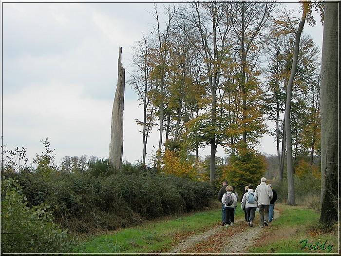 Les Brûlins, forêt de Bord-Louviers 20081030_013