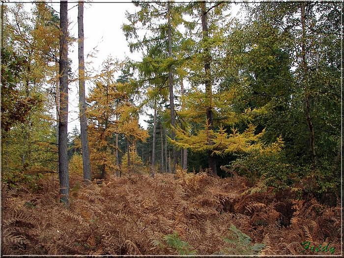 Les Brûlins, forêt de Bord-Louviers 20081030_022