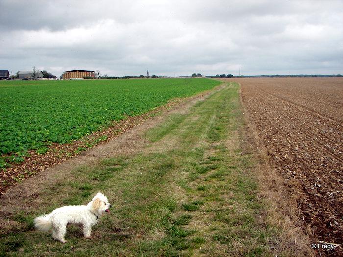 Cintray, le Chemin des Isles 20091023_020