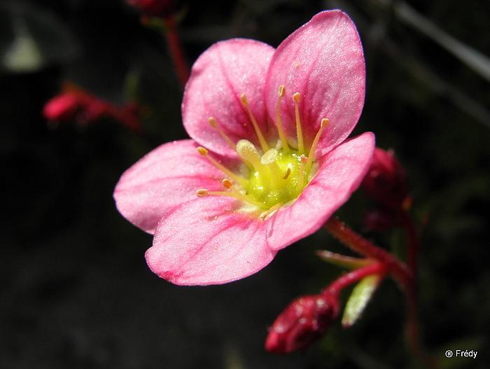 Le printemps au jardin 20100419_003