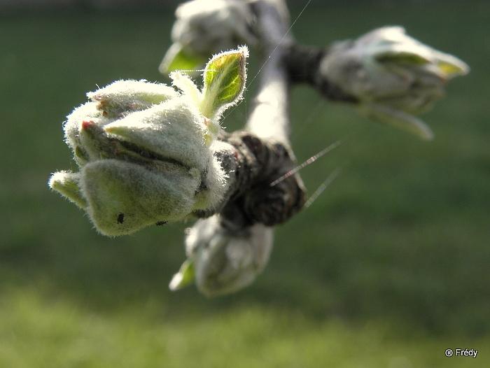 Le printemps au jardin 20100419_014