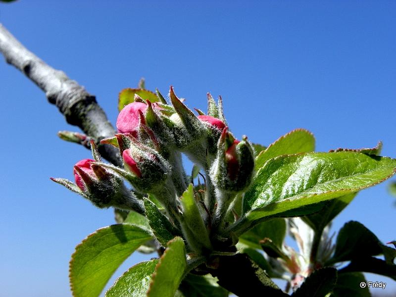 Le printemps au jardin 20100424_026