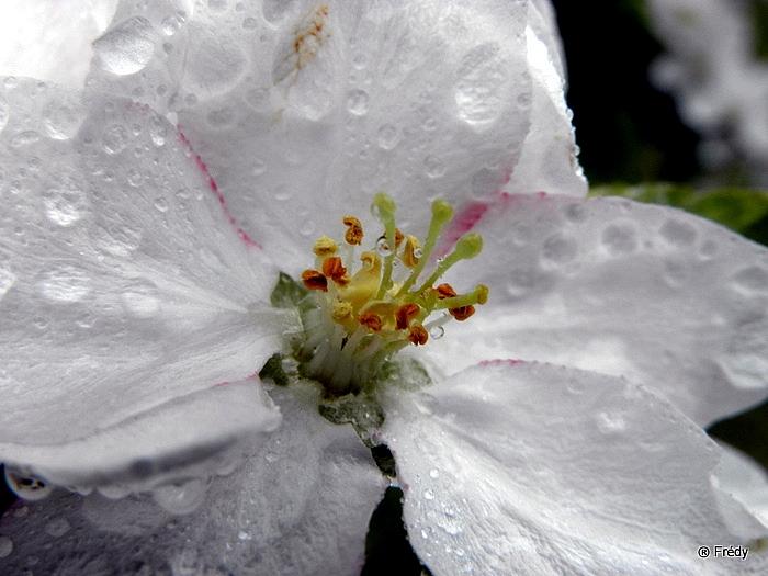 Le printemps au jardin 20100503_020