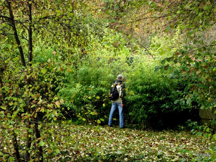 Les étangs de Damville et Le Sacq 20101108_003